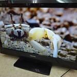 東芝 32型 液晶 テレビ を売るなら 総合リサイクルショップ フライズ佐賀店 佐賀 市 中古 買取り 査定